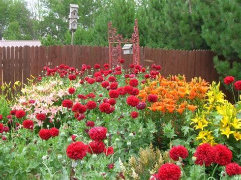 Poppy Flower Garden Poppy Seed
