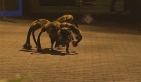 dressed as spider pranksters dressed a up as a spider to scare in poland bored panda