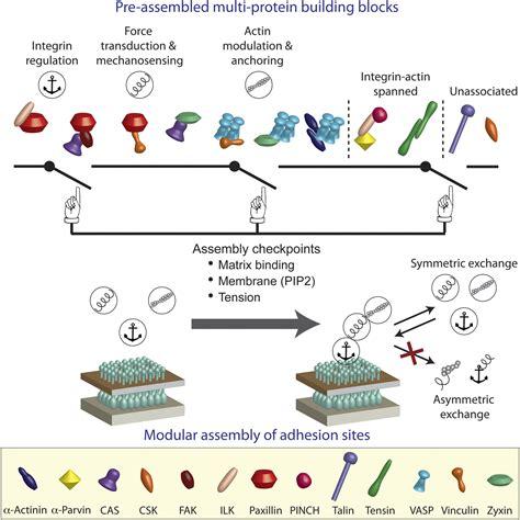 protein building blocks symmetric exchange of multi protein building blocks