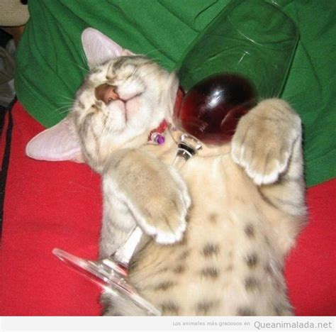 imagenes de viernes tomando gatos que llega el viernes y se dan a la bebida
