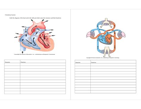 labeling diagram circulatory system labeling worksheet anatomy human