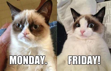 Friday Cat Meme - tgif grumpy cat hi larious pinterest