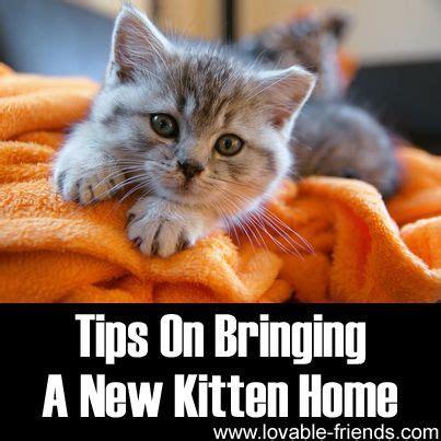 Raising A Cat Planner Box Set Buku Planner Buku Catatan Murah tips on bringing a new kitten home http www lovable friends tips on bringing a new kitten