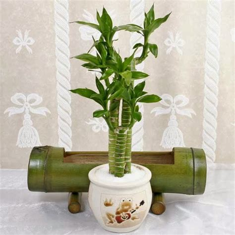 beautiful indoor plants indoor plants simple and beautiful garden park
