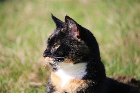 alimentazione gatto l alimentazione gatto sterilizzato i consigli da