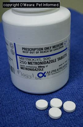 what is metronidazole for dogs coccidiosis in dogs and cats and other animals
