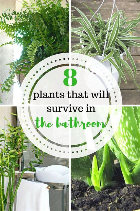 plants for a bathroom without window 10 ideas about house plants on plants indoor