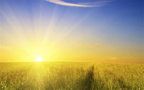 Morning sun on the field full with wheat   HD wallpaper