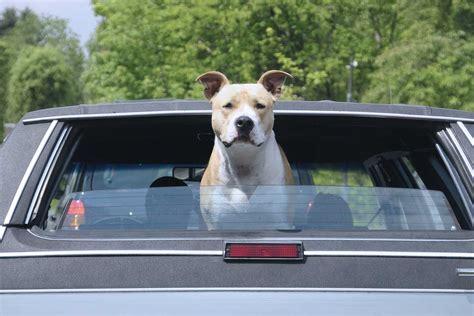 Hund Im Auto Hitze by Hund Bei Hitze Im Auto Lassen Geldstrafe Bis 25 000