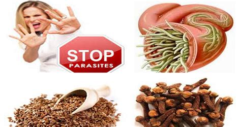 How To Detox Your From Parasites by Discover The Best Herbal Remedies For Destroying Parasites