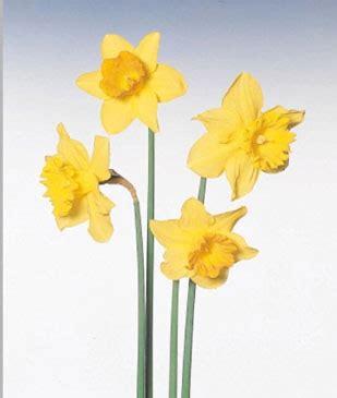 tromboni fiori primavera riello flor blumen export