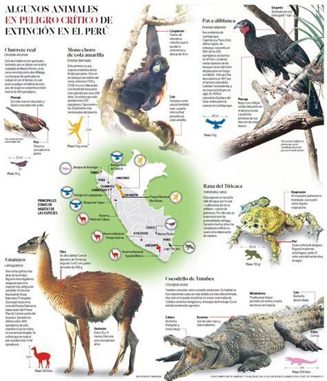 animales peligro extincion peru para colorear animales en peligro de extincion peru buscar con google