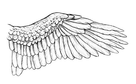 Drawing Wings by Taking Flight A Beginner S Guide Into Drawing Wings