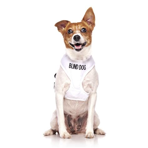 blind dogs blind vest harness friendly collars