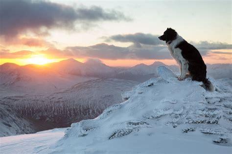 yorkie wallpaper border border collie winter mountain sunset hd wallpaper