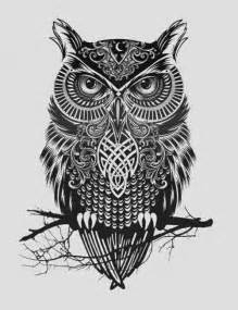 owl drawing owls picture