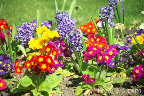 flowers garden image flowers in a garden border pictures free use image 12 13