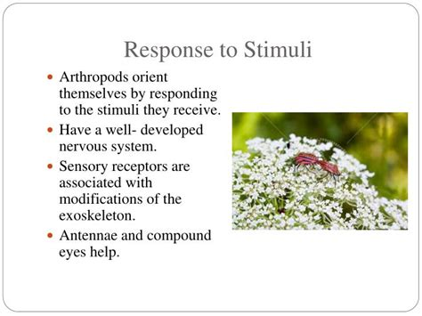 7 Worst Responses To I You 2 by How Do Butterflies Respond To Stimuli Pictures To Pin On