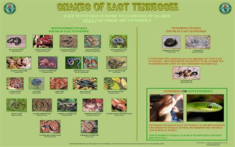 Tn Search Snakes Of East Tn East Tn Wildlife