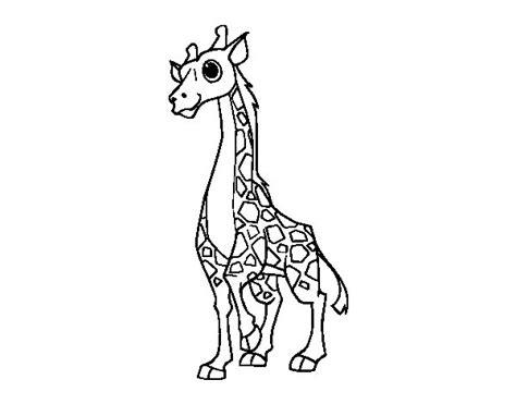 imagenes jirafas para colorear dibujo de jirafa hembra para colorear dibujos net