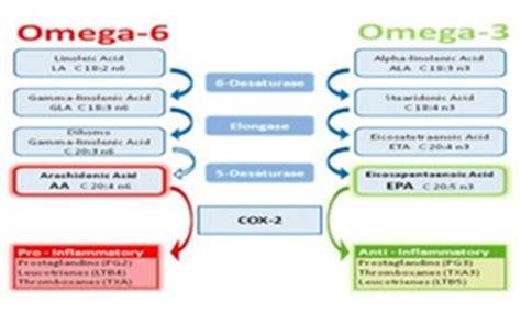 alimenti con omega 3 e omega 6 olio di pesce benefici e propriet 224 degli omega 3 e 6