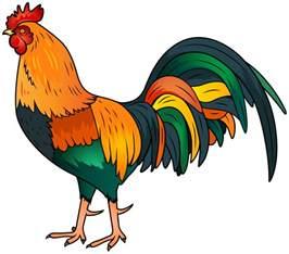 cartoon rooster clipart clipartix
