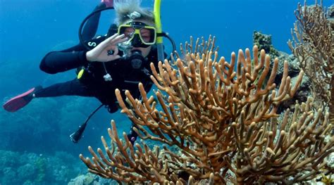 great barrier reef dive trips great barrier reef diving cairns cheapest liveaboard