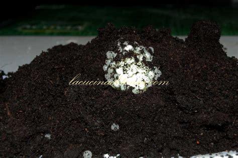 alimentazione lumache di terra giocando con le chiocciole