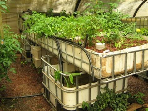 systems backyard aquaponics