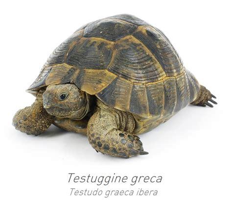 tartarughe da giardino come costruire un terrario per tartarughe di terra in