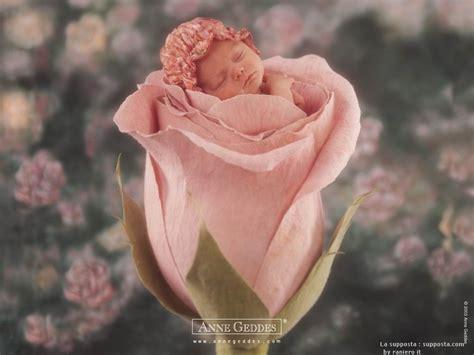 baby flower baby in flower desibucket