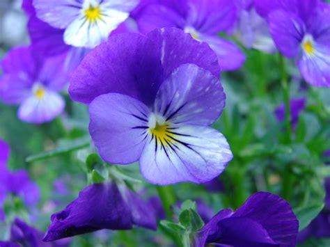 violet s issa s untidy hut jack kerouac s headless hat or issa s