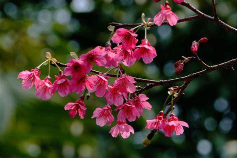 imagenes de jardines de flores hermosas imagenes de flores y jardines