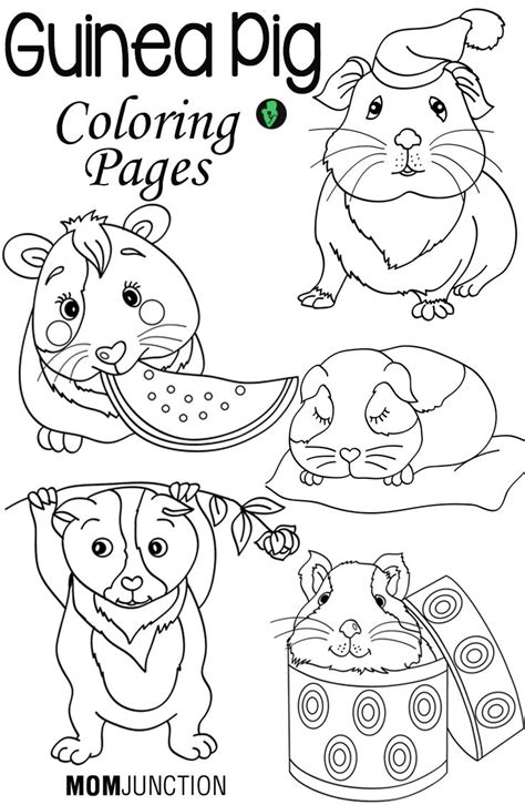 coloring page of a guinea pig 387 best guinea pigs 2 images on pinterest guinea pigs