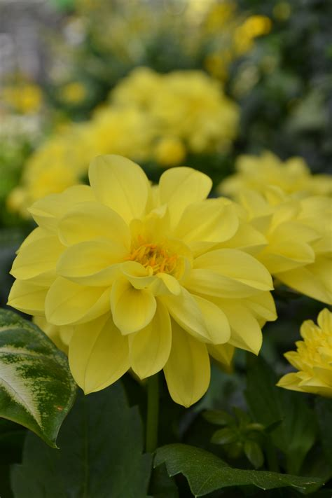 i fiori della primavera tutti i fiori della primavera tagliabue il verde