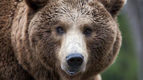 l orso della casa 3 giorni con l orso casa delle farfalle di bordano