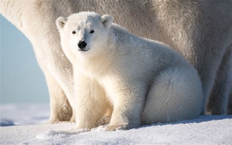 animals in the winter winter animals images reverse search