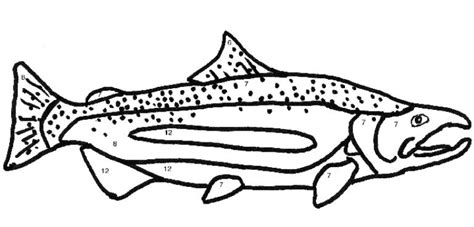 salmon coloring pages sketch coloring page