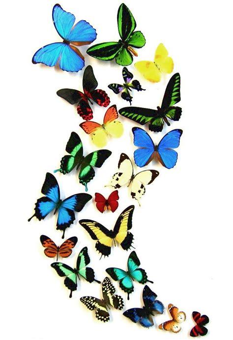Imagenes Animadas De Mariposas Volando | mariposas volando animadas imagui