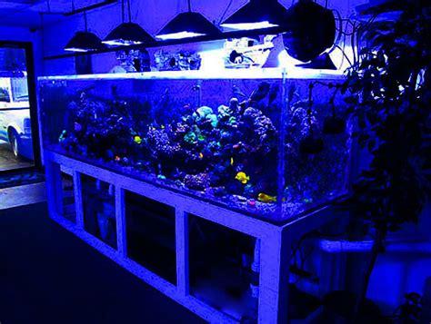 aquarium design criteria shop hop aquarium obsessions meanwhile back in peoria