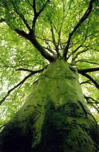 Tree Canopy Rainforest On Emaze
