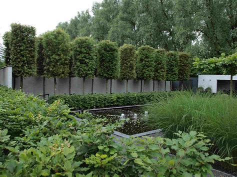 afscheiding tuinen maken wintergroene steeneik google zoeken stadstuin yves vh