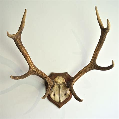 large decorative antlers impressive large symmetrical antler plaque in decorative items