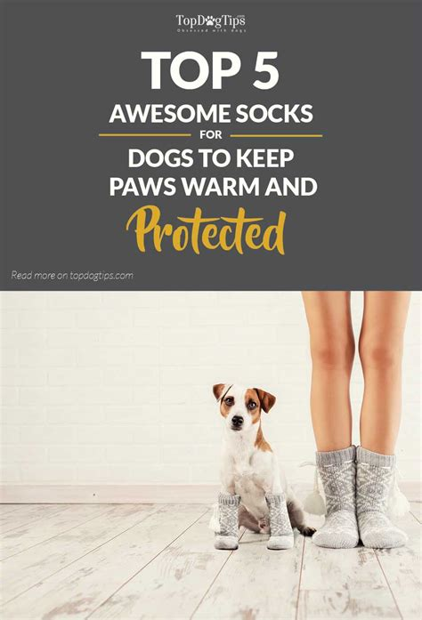 top 5 best socks for dogs for warm and protected paws 2017