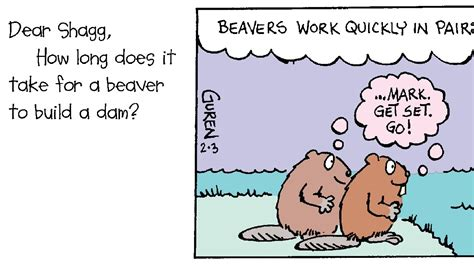 how long does it take to build a tiny house how does it take for a beaver to build a dam