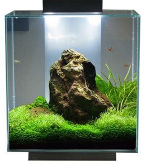 Fluval Edge Aquascape by Fluval Edge 12 Gallon Search Tank Ideas