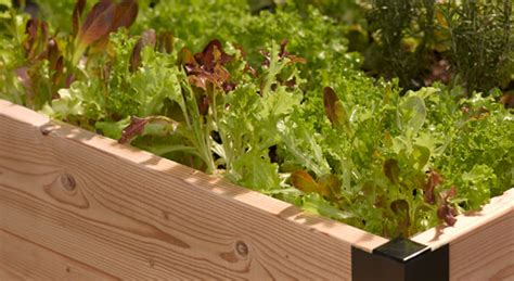 Vegetable Gardening For Beginners Gardener S Supply How To Do A Vegetable Garden