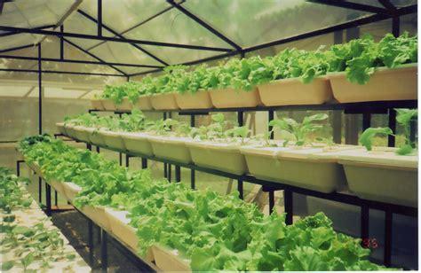 cara membuat tanaman hidroponik organik teknik budidaya sayuran secara hidroponik ibnu sofyan yusuf