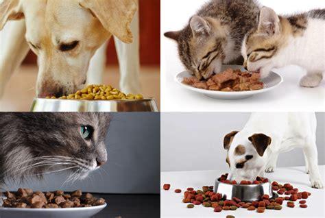alimentazione x cani alimentazione per cani e gatti cosa rende appetitosi