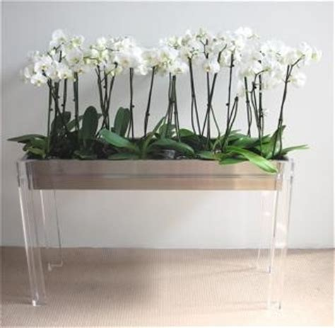 Orchid Planters Uk by Perspex Lucite Orchid Planter Accessories